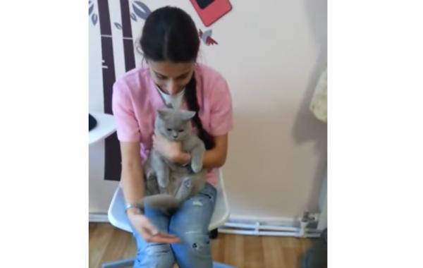 Clinica Pisicilor