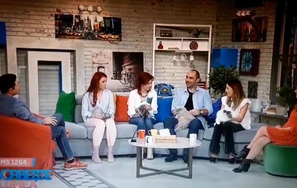 Felisa Outstanding Cats PRO-TV