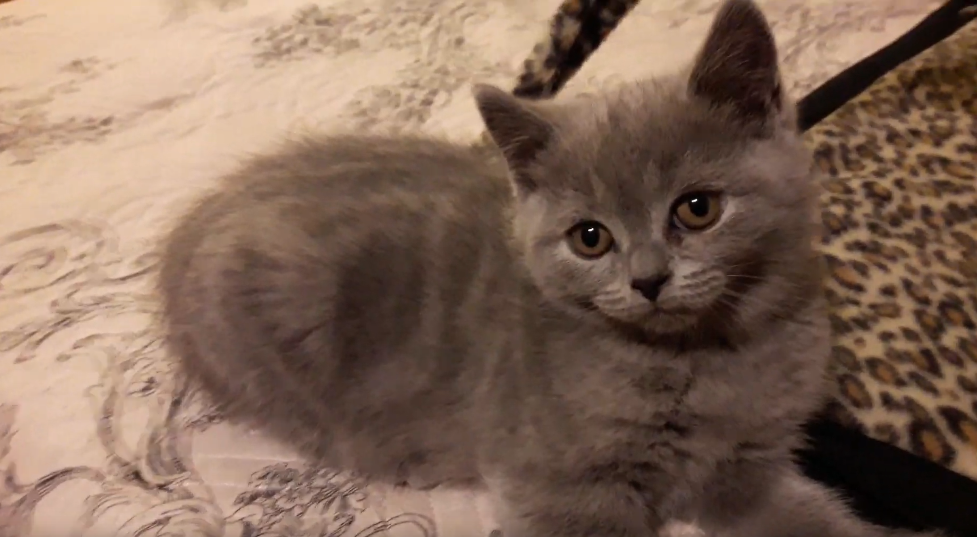 VIDEO – Compilation Cute Kitten
